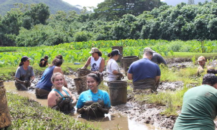 Ecology Club Gets Waist Deep in Mud