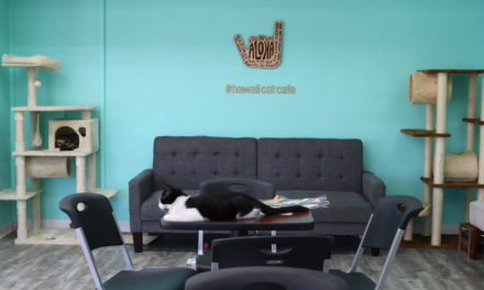 KCC Student Co-Owns Hawaiʻi's First Cat Cafe